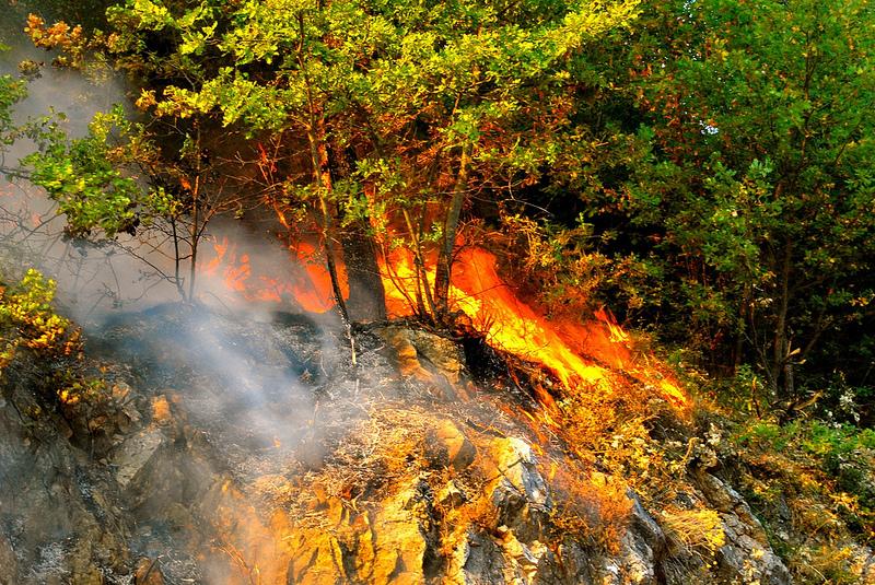 incendi agricoltura