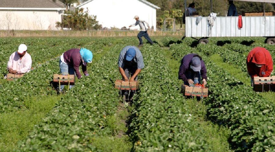 lavoratori stagionali
