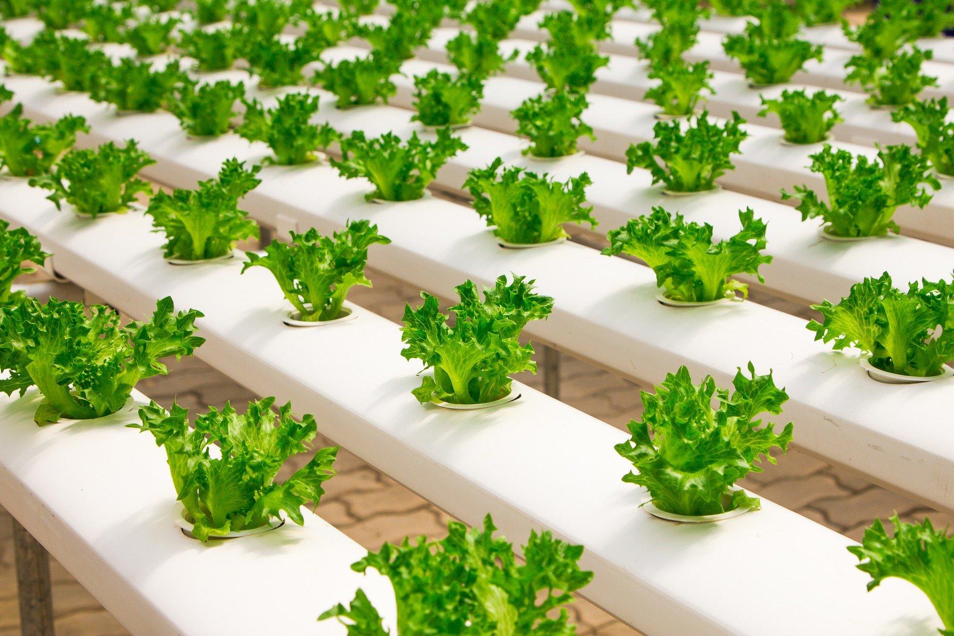 Agricoltura, ad Enna coltivazioni idroponiche nei palazzi