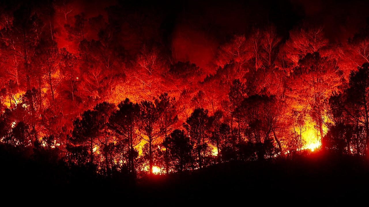 """""""Salviamo i boschi"""" Sicilia dialoga con Regione per contrastare gli incendi"""