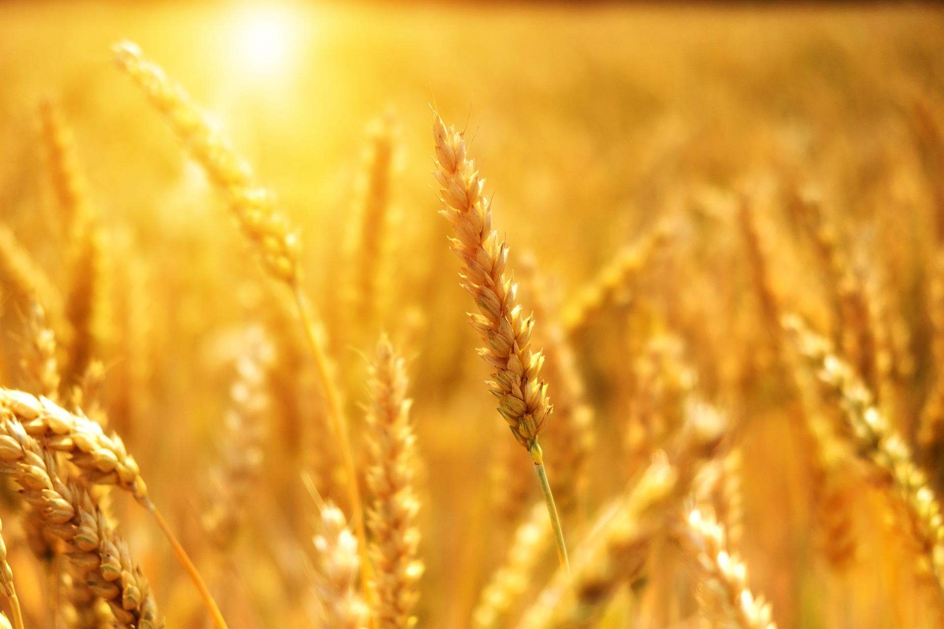 Agrinsieme, nel settore agricolo l'occupazione ha tenuto