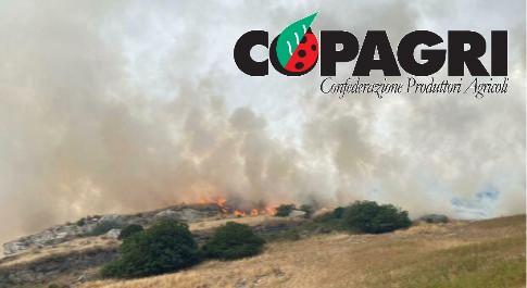 Incendi, Copagri: al via raccolta fondi per gli agricoltori della Sardegna